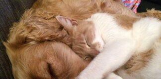 choroby zwierząt domowych - pies i kot